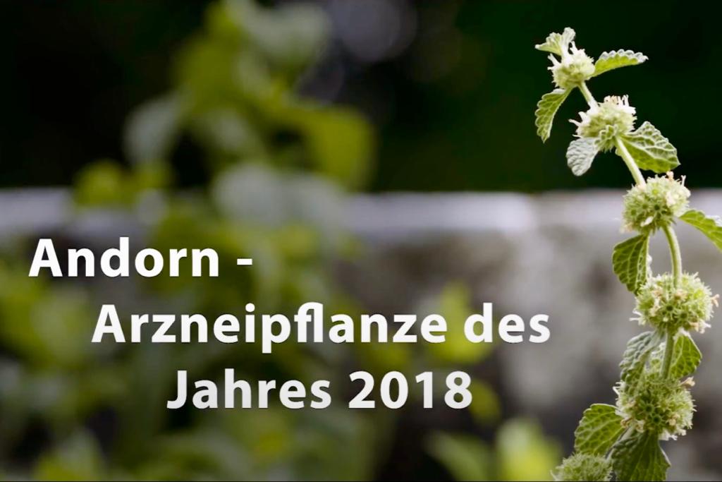 Arzneipflanze des Jahres 2018
